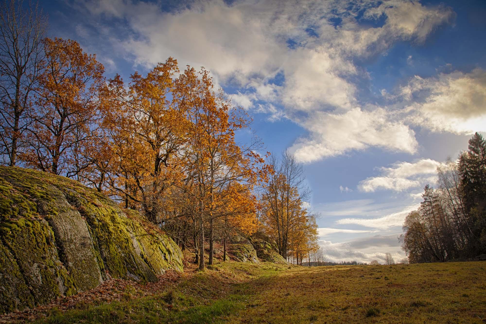 042 - Høsttrær